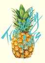 SALE OFF!新品DVD!【サーフィン】 Tropically Yours!<Transworld Media>