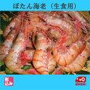 【北海道直送】北海産 刺身用 ぼたん海老【ボタンエビ】(タラバエビ科★トヤマエビ) M 1kg(約2