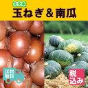 【送料無料】北海道 北見産 玉葱 L大 4kg+北海道産 南...