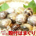 ボイル 殻付はまぐり 10-15個入 500g 【蛤/はまぐり/ハマグリ/お吸い物/殻付き/出汁/バーベキュー】