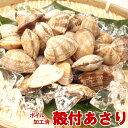殻付きあさり 500g【ボイル済み】【冷凍】 【あさり/アサリ/殻アサリ/浅利】