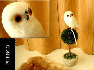 プエブコ ふくろう ホワイト フクロウ