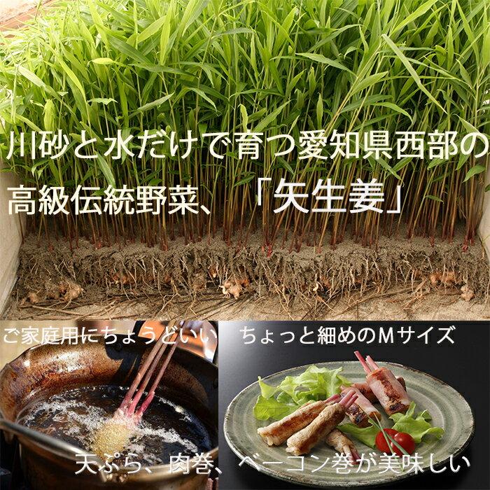 ☆伝統製法で作る色鮮やかで香り豊かな金時生姜の葉生姜☆『矢生姜M(30本入り)』