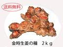 【2kg】ご家庭で金時生姜栽培をお楽しみください。金時しょうがの種いも『金時種生姜
