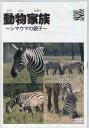 動物家族~アフリカ編~シマウマ 【DVD】