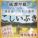 【送料無料】【新米】平成30年産 佐渡産こしいぶき 10kg...