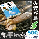佐渡産丸干しいか 500gイカの旨みが凝縮日本海の地荒波で育ったイ真イカ10〜20匹も入ってる!!【RCP】【冷凍】【贈り物】【ギフト】【誕生日】【酒の肴】【おつまみ】【中元】