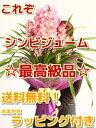 【送料無料】【ラッピング無料】最高級シンビジューム 4〜5本 ピンク系品種おまかせ(シンビジウム)