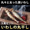 鰯(イワシ)丸干し干物 (5尾入り) / いわし / ひもの 【RCP】05P01Nov14