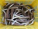 鹿角!!天然素材 北海道の蝦夷鹿の角  角の先端部分のカット品 1キロ♪ 水・海難厄除のお守り ナイフ材等に 【RCP】  05P01Nov14
