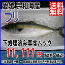 愛媛 宇和海産 【 ブリ(鰤) 】 4-5kg ( 活き締め 下処理済 ) 送料無料 宇和海の幸