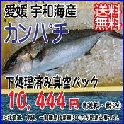 愛媛 宇和海産 【 カンパチ / 間八 】 3-4kg 宇和海の幸問屋 送料無料