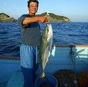 愛媛 佐田岬産 ( ブリ ) 天然一本釣り 5-6kg 浜から直送 送料無料 北海道、沖縄、東北は別