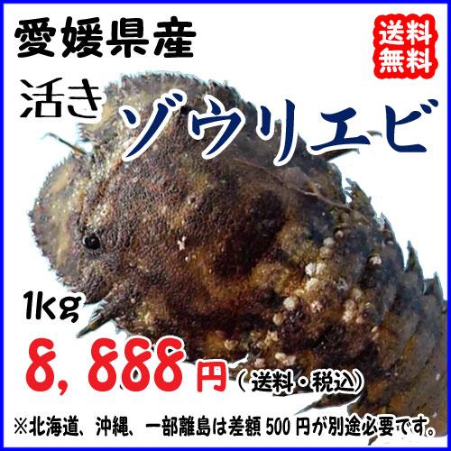 愛媛宇和海産 『ゾウリエビ 1kg』【送料無料】