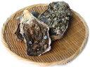 愛媛 天然 ( 岩牡蠣 ) 0.7-1kg 10個 送料無料 宇和海の幸問屋