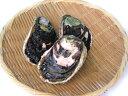 愛媛 養殖 ( 岩牡蠣 ) 350-450g 5個 送料無料 宇和海の幸問屋