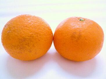 【送料無料】【訳あり】和歌山産 甘夏(あまなつ)10kg この甘酸っぱさがたまらない!
