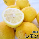 【送料無料】国産(和歌山産)グリーンレモン/レモン 訳あり 5kg 【防腐剤不使用/ノー