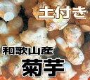 【送料無料】和歌山産 菊芋(キクイモ)生 5kg 土付き【無農薬】テレビで話題のスーパーフード