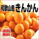 ≪送料無料≫紀州産 金柑/きんかん 3Kg【訳あり・家庭用】