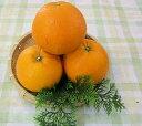 【送料無料】和歌山産 ≪福原オレンジ≫3kg めずらしい国産オレンジです