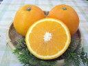 【送料無料】【訳あり】和歌山産 ≪福原オレンジ≫5kg めずらしい国産オレンジです