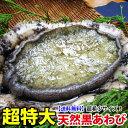 超特大黒アワビ 500g前後1枚 レア食材!届いてビックリサイズの黒あわび(クリスマス)(
