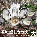 高島の一年若牡蠣(カキ)天然活サザエおいしいセット(大)『!送料無料!』  貝類2種【RCP】