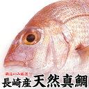 長崎産天然真鯛(釣りもの一級品・活もの)4kg前後 1尾 (...