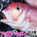 アマダイ(アカアマダイ) 計1.2kg前後(600g前後2尾)長崎産上質な白身の甘鯛をお腹いっぱい食べて下さい!【RCP】【140405coupon300】【05P06May14】