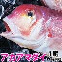 アマダイ(アカアマダイ) 1kg前後1尾長崎産上質な白身の甘鯛をお腹いっぱい食べて下さい!【RCP】【140405coupon300】【05P06May14】