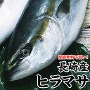 養殖ヒラマサ(平政) 1〜2 尾 計8kg前後送料無料!さっぱりした脂と新鮮な歯ごたえ!【RCP