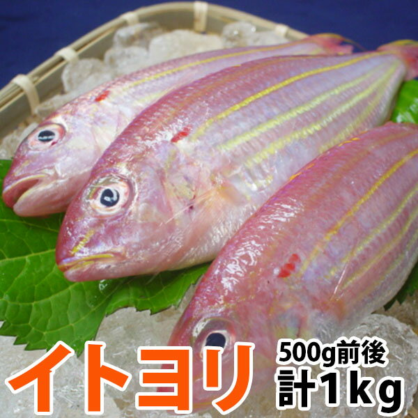 イトヨリ 計1.0kg前後(300-500g前後サイズ) 五島灘で獲れた上品な味わいのイトヨリダイ