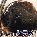 天然ヒラメ(ひらめ) 1.3kg前後1尾五島灘で水揚げされた美味しい天然ヒラメをご自宅で!【RCP】【140405coupon300】【05P06May14】