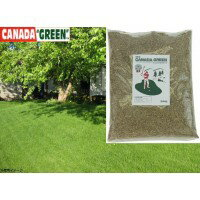 【送料無料】NEWカナダ・グリーン 【アイデアガーデニング・花・植物・DIY】/芝生 種 カナダグリーン グリーン 芝生 種 カナダグリーン グリーン