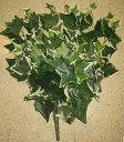 人口観葉植物 アイビー リーフ ブッシュ 全体約30cm 高さ50cm 1束(枝12本分)