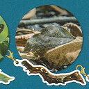 ネイチャーテクニカラーFLAT イモムシハンドブックメタルチャーム 8:アケビコノハ いきもん ガチ