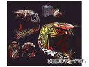 2輪 ダートフリーク フォックスレーシング V3 ライアン・ダンジーロックスターレプリカ ヘルメット 01165-075