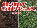 【今年の新物です】大変貴重な天然もの【淡路島産】】天然もずく500g(塩蔵処理などは一切しておりませ