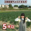 【送料無料】淡路島愛ちゃん たまねぎ【5...