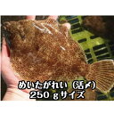 淡路島産メイタガレイ(活じめ)1枚約250g(めいた かれい)お刺身・煮付け用