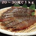 淡路産天然アシアカ海老(生・氷〆)20〜30尾合計約1kg(アシアカエビ/クマエビ)(足