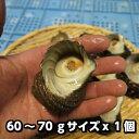 淡路島産天然活さざえ(小)60〜70g�