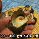 淡路島産天然活さざえ(中)90〜100g