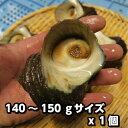 淡路島産天然活さざえ(大)140g〜15