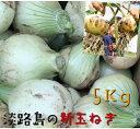 【訳あり】淡路島産 新玉ねぎ 5kg...
