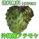 沖縄産アテモヤ 白箱入り2kg 送料無料ギフト(贈...