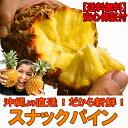 【送料無料】沖縄産スナックパイン約1.5kg自社管理農園から直送だから安心保証付き沖縄産フルーツ パ