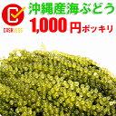 沖縄産海ぶどう100g★天皇杯受賞 メー...