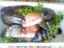 🎃ハロウィーン♪『鮮魚』産直! 何が入っているかお楽しみ02P01Oct16